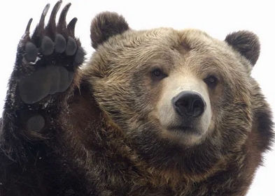 STOCKS: Are we waiting for the bear?