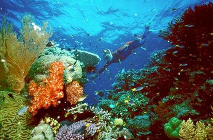 Prince Albert urges others to join major coral reef initiative