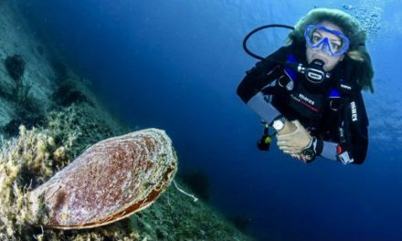 Monegasque institutions continue quest to save species on brink of extinction