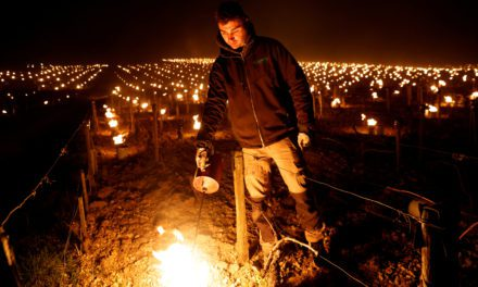Financial aid for frost-hit winemakers