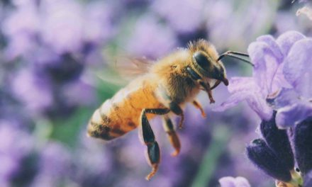 APIdays return to the Principality to raise awareness for bees