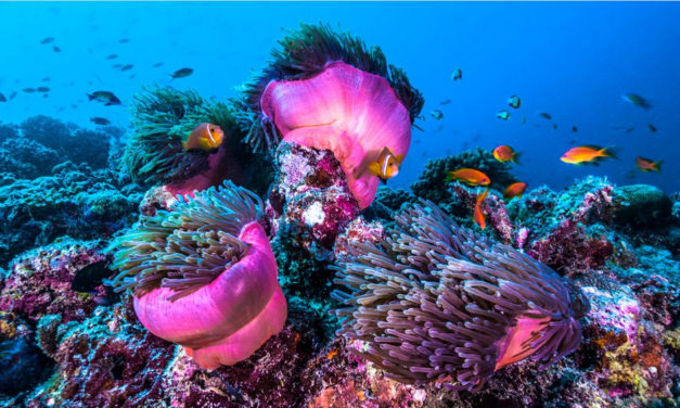 Monaco passes torch on coral reef protection